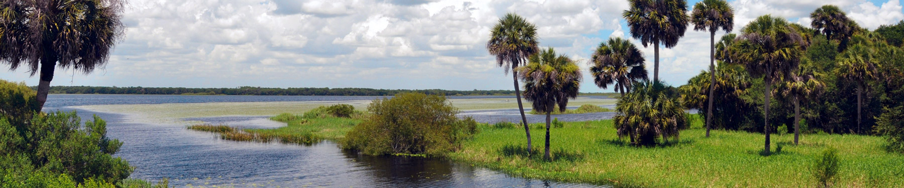 Marshes, swamps and palms in Nearby Myakka River State Park